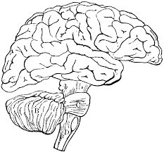 free brain clipart image 4011 brain clipart free clipart images