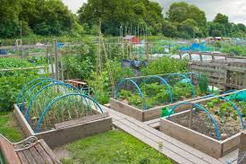kitchen garden design vegetable garden design ideas for designing
