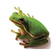 green tree frog petco