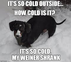 It S So Cold Meme - frankie the dachshund 2016 blizzard imgflip