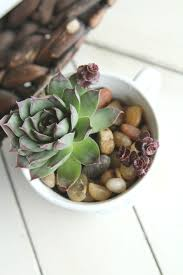 succulent planter diy teacup succulent planter idea