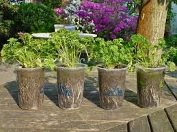 the easiest 10 vegetables and herbs to grow in containers u0026 pots