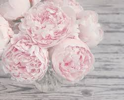 Shabby Chic Wall Art by Flower Photography Pink Peonies Pink And Gray Shabby Chic