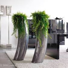 Plants For Office Plants For Offices In London Office Plants And Maintenance In London