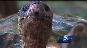 what does the okc zoo do to keep animals you safe in bad weather