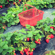 allotment ideas for beginners u2013 tips for grow your own newbies