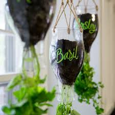 best 25 hanging herbs ideas on pinterest herb wall indoor wall