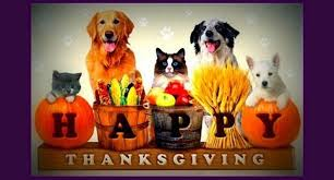 pasadena now keep your pet safe with these thanksgiving tips