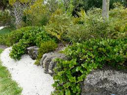 native florida plants low maintenance florida native plant society blog horizontal cocoplum in the