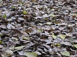 dried leaves 149 free photos photovaco com download loversiq