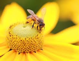 starting a flower garden is a great way to help our honeybee