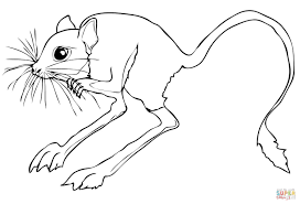 desert rodent jerboa coloring page free printable coloring pages