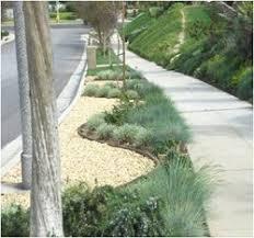 Drought Tolerant Landscaping Ideas Drought Tolerant Landscape Parkway 2 Resize Name Of Plants