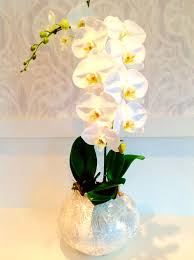 orchid delivery orchids bee flowers vancouver flower shop delivery service