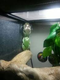 white s tree frog jeff grabert colors aqua teal turquoise