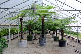Large Tree Planters by Storing My Tropical Plants For The Winter The Martha Stewart Blog