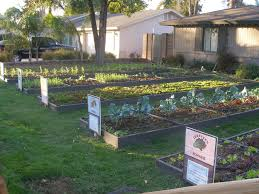 Backyard Landscaping Ideas Fall Front Yard Vegetable Garden Design Back To Small Backyard