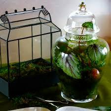 indoor gardening with terrariums the gardener u0027s eden