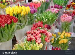 Beautiful Flowers Image Assortment Beautiful Flowers Floral Shop Stock Photo 646516624