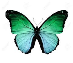 Blue And Green Butterfly - butterflies flying morpho green butterfly isolated on white