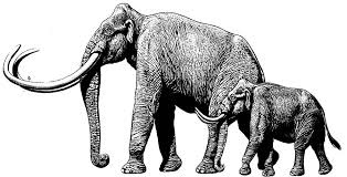 extinct mammoth fact sheet