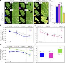 Google Maps Ralph Mueller by Central Metabolic Responses To Ozone And Herbivory Affect