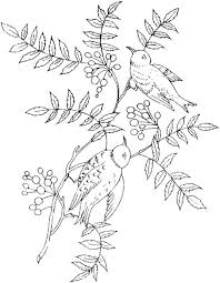 impressive bird coloring pages adults insp 395 unknown