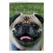 happy birthday pug greeting cards zazzle