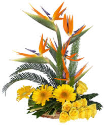 just flowers florist bangalore florist online flowers delivery in bangalore send
