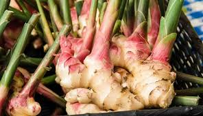 Is Ginger Root A Vegetable - when do you harvest ginger hobby farms