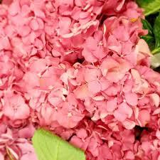 wholesale flowers denver dwf wholesale florist cincinnati home