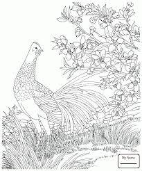 state birds coloring7 com