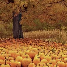 pumpkins vermont usa photos i vermont