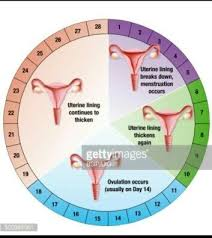 what is the meaning of fertile days quora
