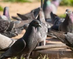 15 backyardbirds