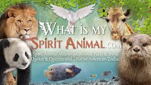 going native my journey from what is my spirit animal spirit totem u0026 power animals