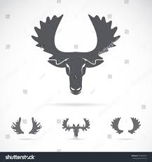 vector image moose head on white stock vector 246825895 shutterstock