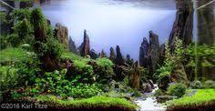 Aga Aquascaping Contest The Breeze 270 L 120x45x50 Aquascaping Pinterest