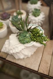 she sells sea shells succulent container gardens pinterest
