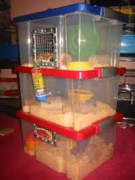 Cages For Guinea Pigs Guinea Pig Cages Plastic Totes Can Be Converted Into