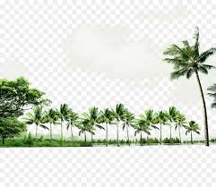 seaside resort green atmosphere coconut tree border