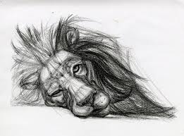 drawn lion nature pencil and in color drawn lion nature