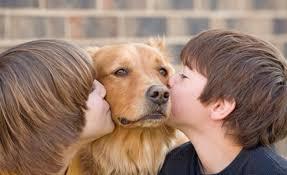 Dog Burial Backyard Why Lubbock Residents Can U0027t Bury Pets In The Backyard