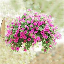 200pcs bag new arrival petunia seeds best selling perennial