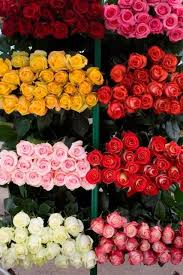 bulk roses sunglow bulk flowers reviews fort lauderdale fl 8 reviews