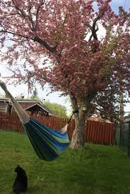 brazilian hammocks buy online hammock universe canada