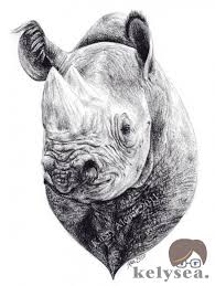 29 best rhino images on pinterest rhinos sketching and draw