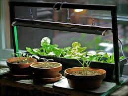 indoor garden apartment indoor herb garden grow light growing
