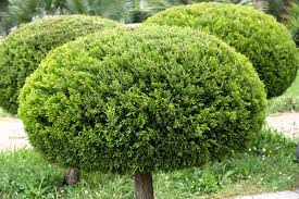 lawn tree and shrub care horticultural services everything green