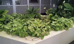 lively indoor plants for home decor instead of plastic